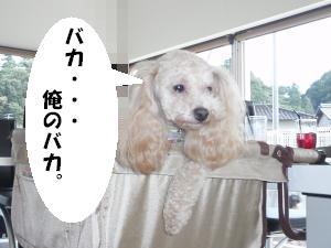 20090718-11.jpg