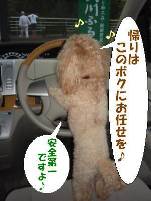 安全運転でお願いします・・・