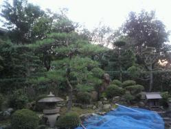 20111013植木2