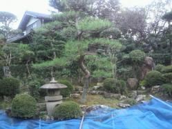 20111013植木