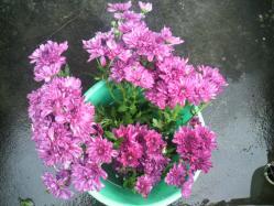 20111015花