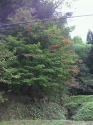 20111025紅葉