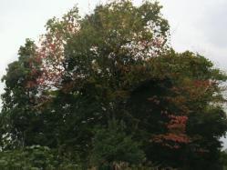 20111025紅葉3