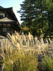 20111028大本さんの紅葉
