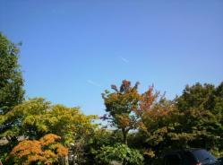 20111028大本さんの紅葉10
