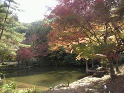20111116紅葉