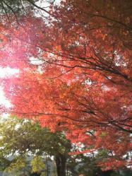 20111130紅葉~♪