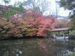 20111130紅葉~♪2