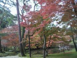 20111130紅葉~♪3