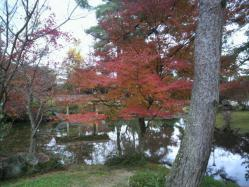 20111130紅葉~♪7