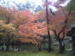 20111130紅葉~♪5