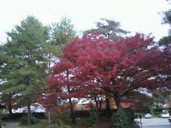 20111130紅葉~♪8