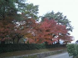 20111130紅葉~♪9