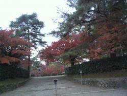 20111130紅葉~♪10