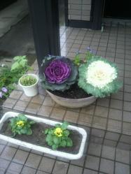 20111130花~♪4