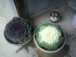 20111130花~♪5
