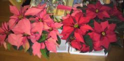 20111201花~♪8