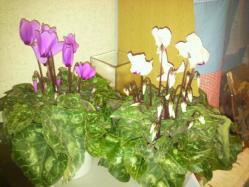 20111201花~♪9