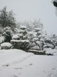 20111227雪2