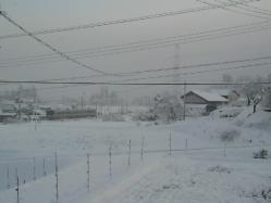 20111227雪5