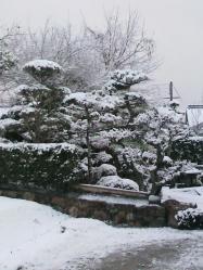 20120104雪2