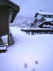 20120124大雪3