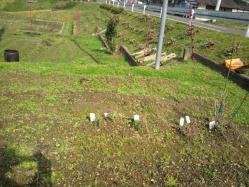 20120320畑