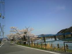 20120412さくら川沿い