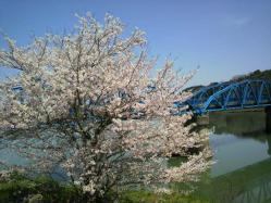 20120412桜川沿い2