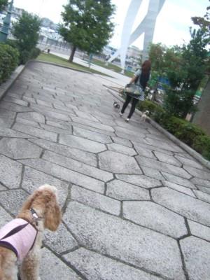 ドリプラお散歩