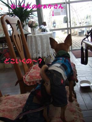 20090308バラ園04