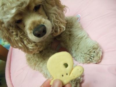 20090516クッキー02