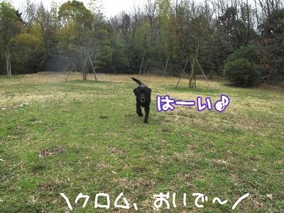 IMG_2984_resize1.jpg