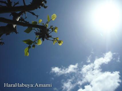 今日の奄美の空