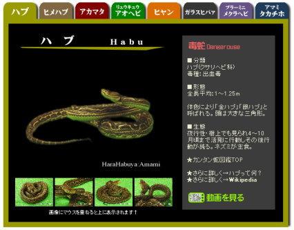 奄美の簡単蛇図鑑