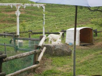 farm15.jpg