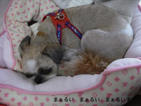 sleep1_convert_20080725133329.jpg