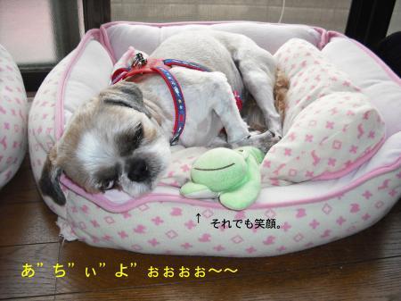sleep2_convert_20080725133440.jpg
