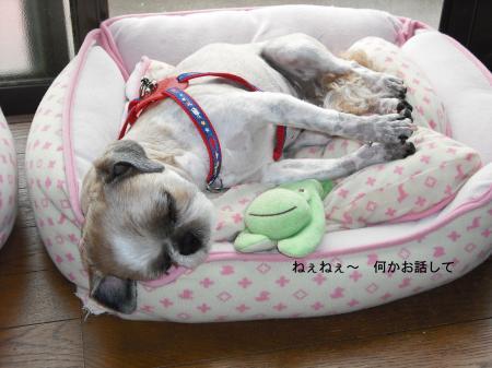 sleep4_convert_20080725133624.jpg