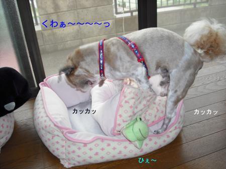 sleep5_convert_20080725133713.jpg