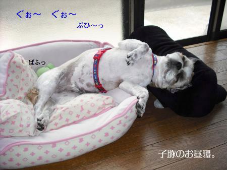 sleep8_convert_20080725135429.jpg