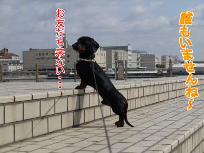 10_20090307215717.jpg