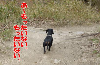 10_20090407013352.jpg