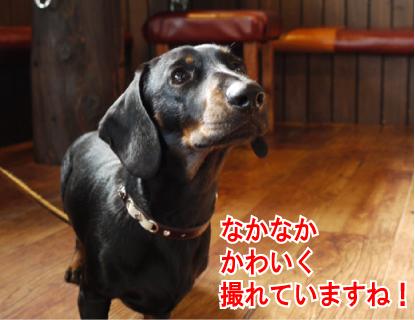 10_20090411223708.jpg