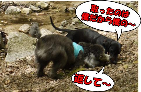 10_20090414114920.jpg