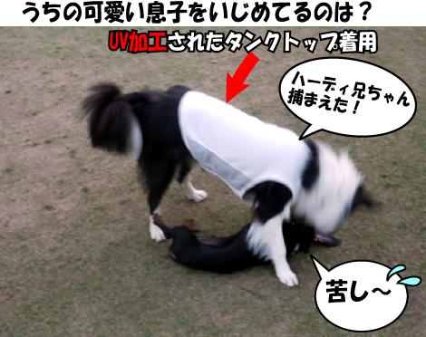 10_20090415134932.jpg