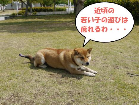 10_20090503023740.jpg