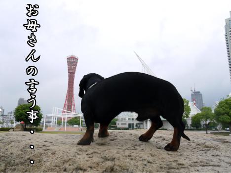 10_20090611192159.jpg