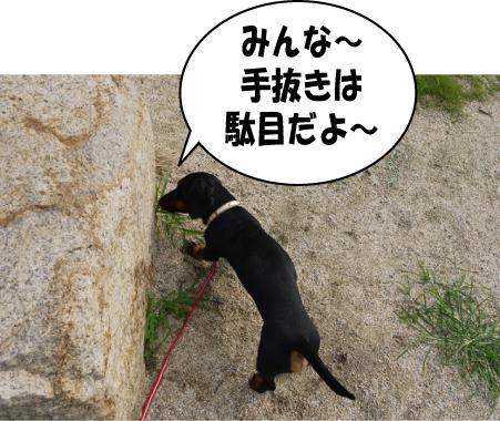 10_20090717214549.jpg