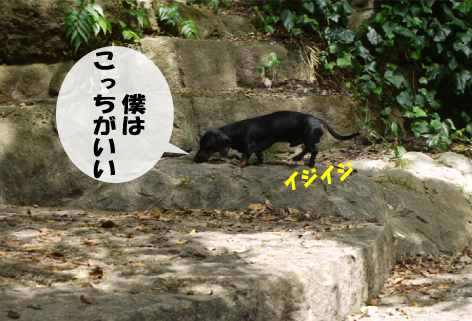 10_20090904145410.jpg
